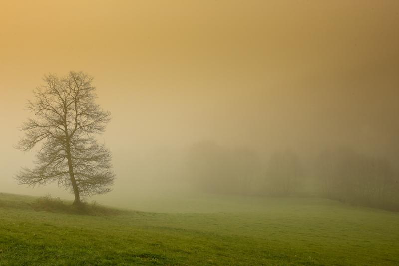 Arbre dans la brume de printemps je me suis lev de bonne - Longtemps je me suis couche de bonne heure ...